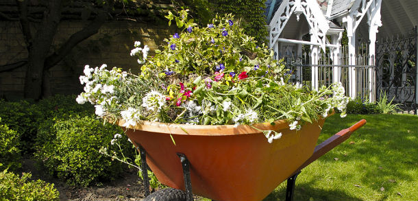 Wheel barrow full of plants and flower in a garden